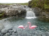 cuilin-flamingo