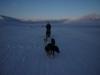 dog-sleigh